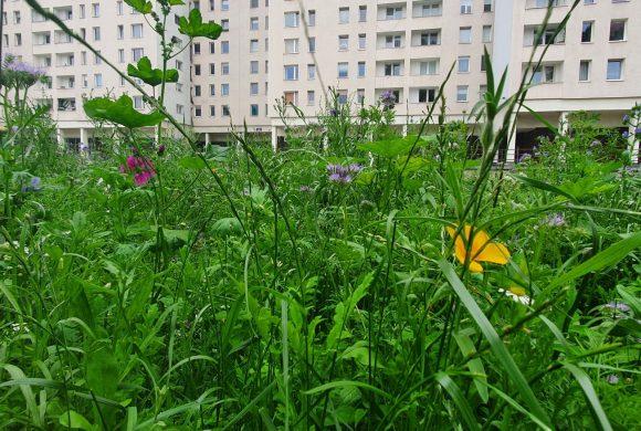 Łąki kwietne naManhattanie – piszą onas